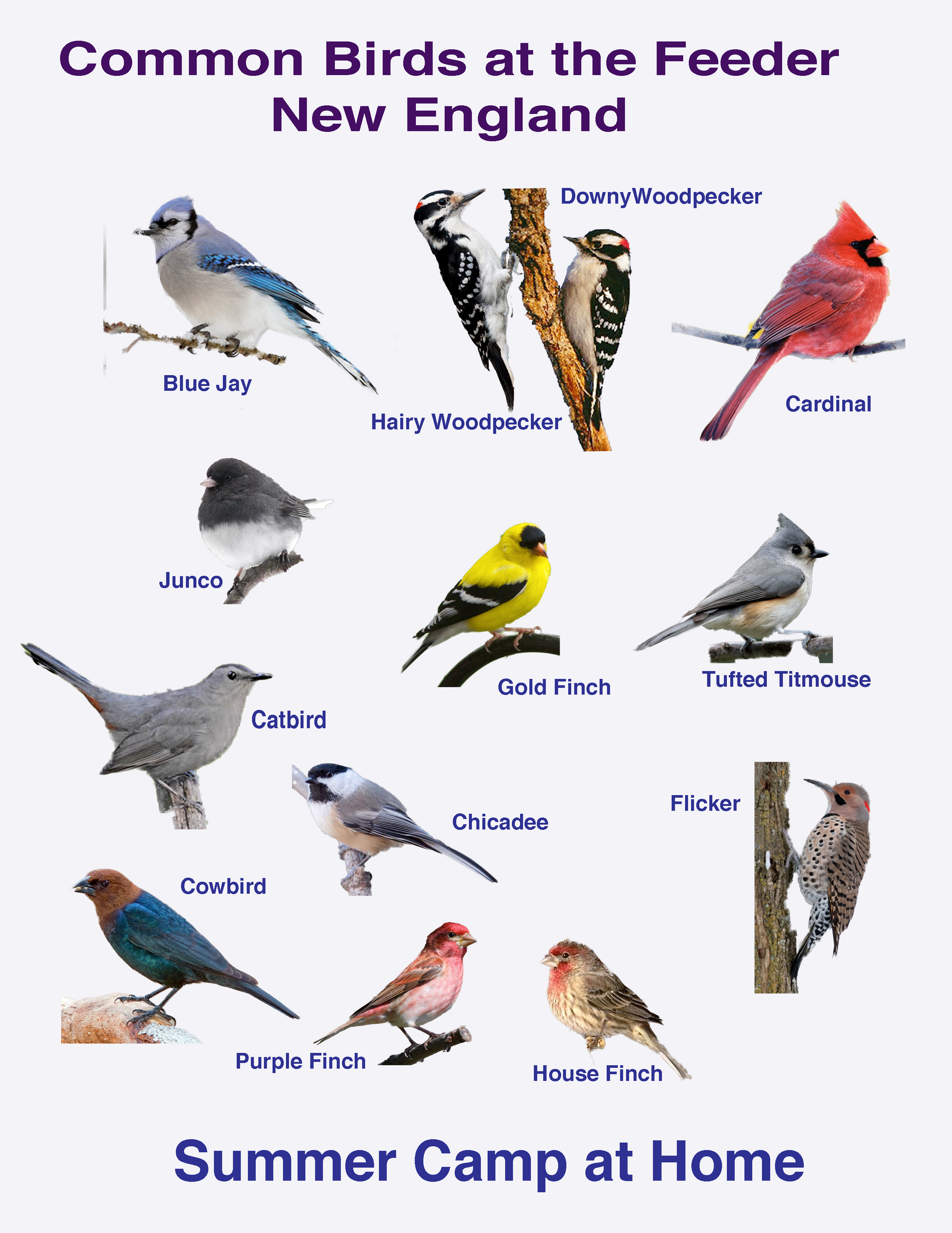 Types Of Hawks In Virginia Beach